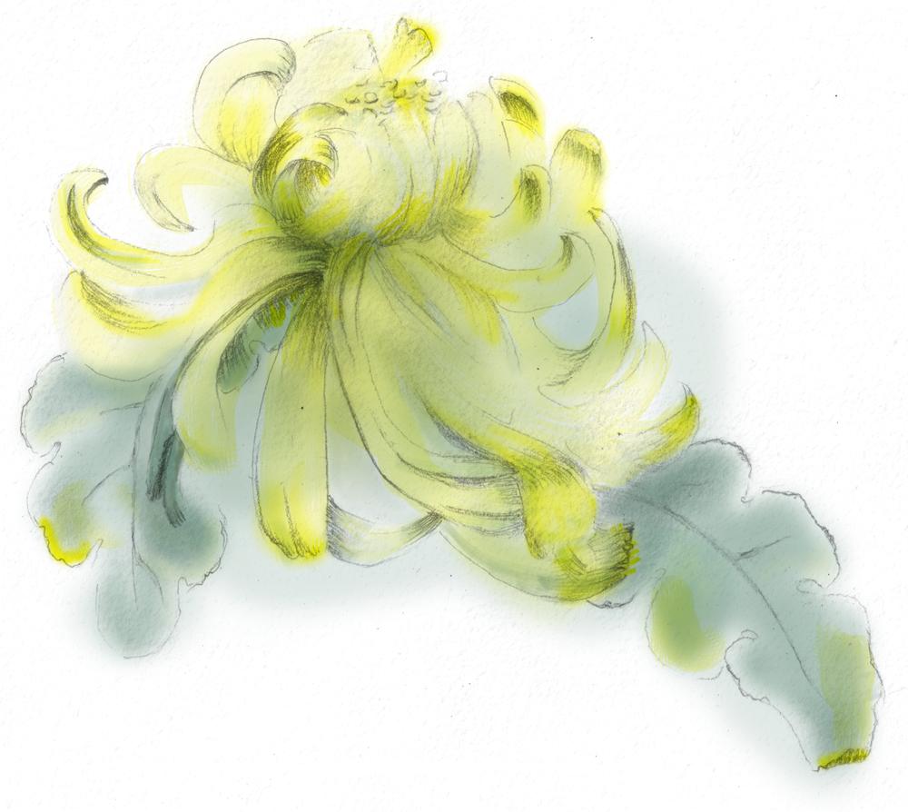 img botanical drawing